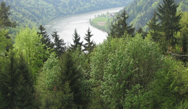 Blick zur Donau (© Tourismusverband Lembach i.M.)