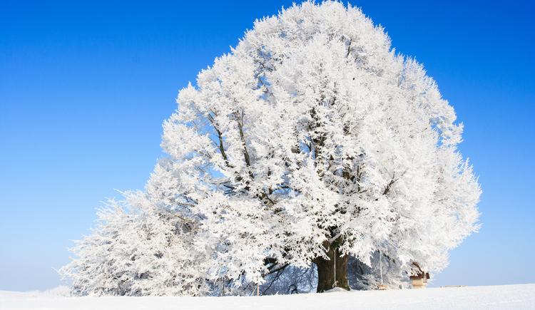 Winterlandschaft Innviertel. (© Winterlandschaft Innviertel)