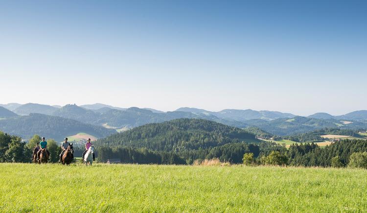 Wanderreiten ohne Zwang (© OÖ Tourismus/Erber)