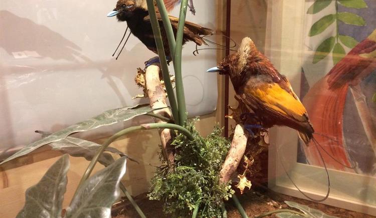 Ausstellung Exotic pur2 (© Naturmuseum Salzkammergut)