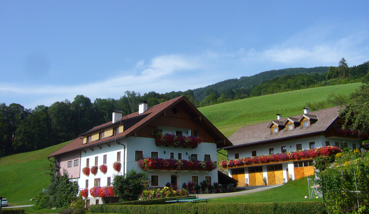 look at the houses with balcony and flowers, surrounded by Meadows, in the backgroud a forest