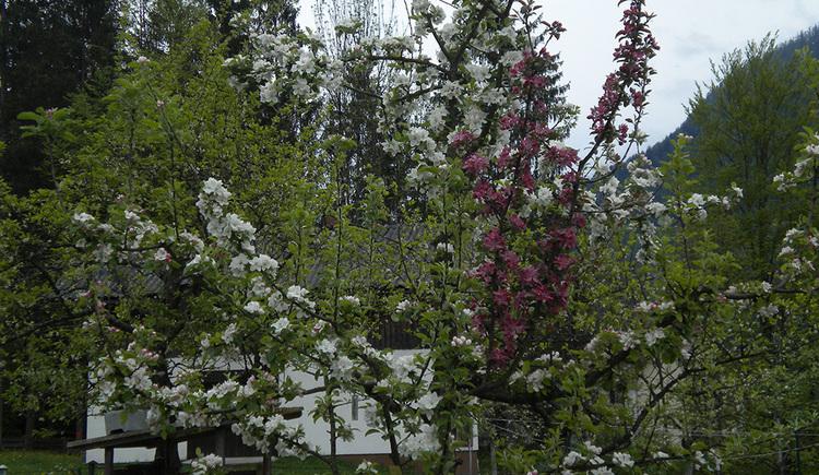 Blühender Obstgarten im Sommer