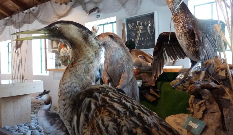 Schopper- und Fischermuseum Aschach