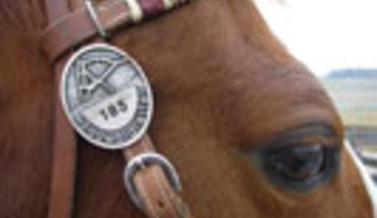Engelhartszell, Pferd, reiten