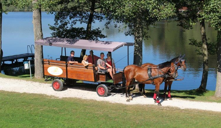 Pferdekutschenfahrten (© TV Franking / Sandy Reindl)