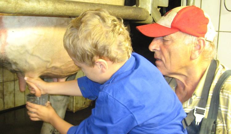 Milchkühe, selber Melken, lieblingskuh, Bauernhof , Kinder\n