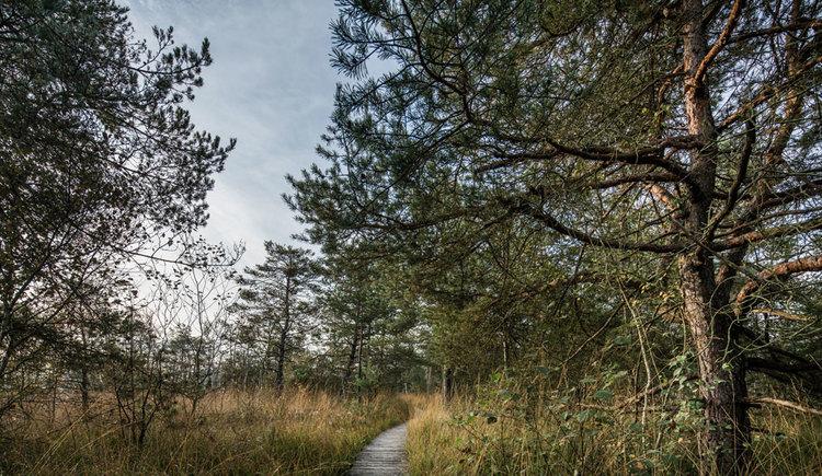 Boardwalk im Ibmer Moor. (© Oberösterreich Tourismus GmbH/Robert Maybach)