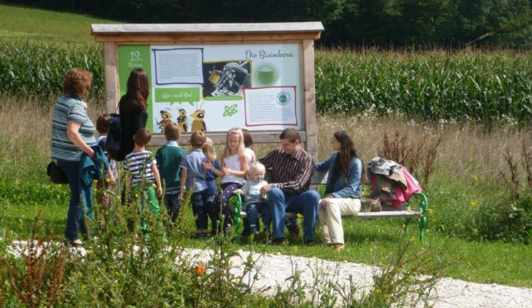 Interessierte Kinder am Bienenlehrpfad (© Bienenhof Attersee)