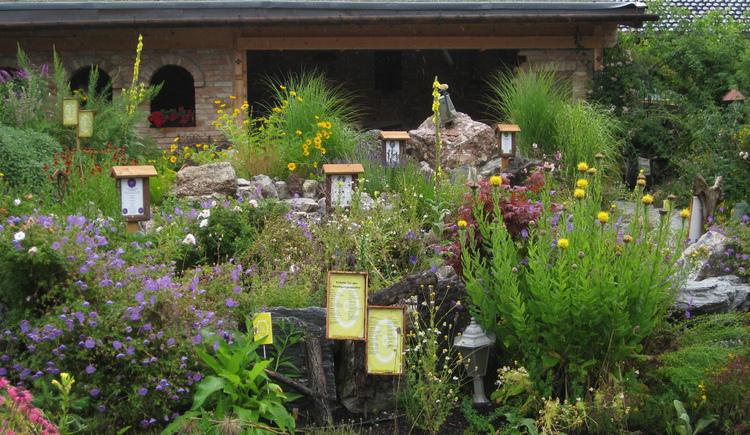 Viel verschiedene Kräuter & Pflanzen - Oberhinteregger´s Kräutergarten (© Oberhinteregger´s Erlebnisbauernhof Faistenau)