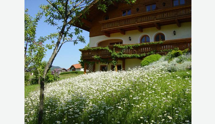 im Vordergrund Blumenwiese, dahinter das Haus
