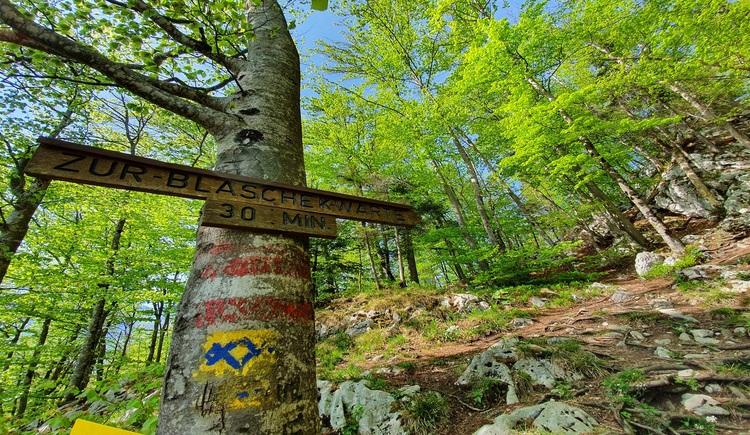 Die Wanderung zur Blaschekwarte beginnt am Parkplatz der Rathlucken Hütte und führt über den Sagen- und Höhenweg bis zur Ewigen Wand. Nach den 2 Tunneln beginnt rechter Hand der Aufstieg in den Wald. (© Katrin Kienast)