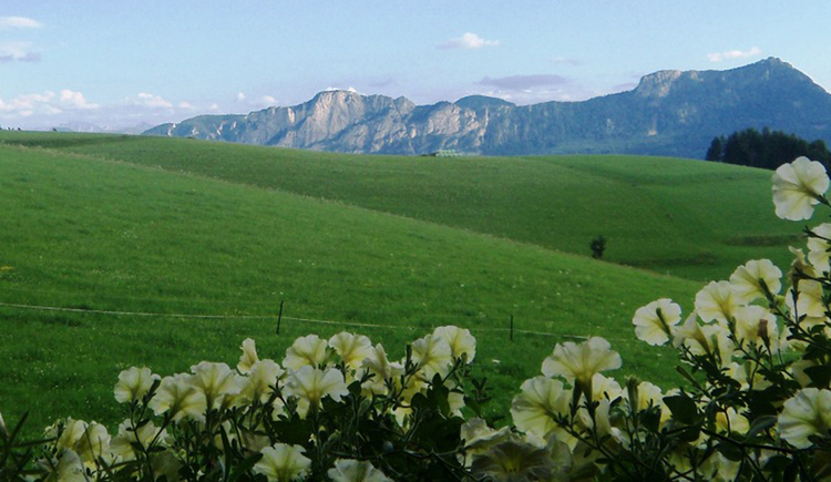 view from the balcony, flowers, meadow, in the background mountains\n