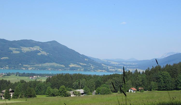 Blick von Obernberg auf den Mondsee, im Vordergrund Bauernhöfe vor einem Waldstück, dahinter der Mondsee, im Hintergrund die Kulmspitze.