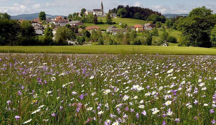 Frühling in Schwarzenberg (© Gemeindeamt Schwarzenberg)