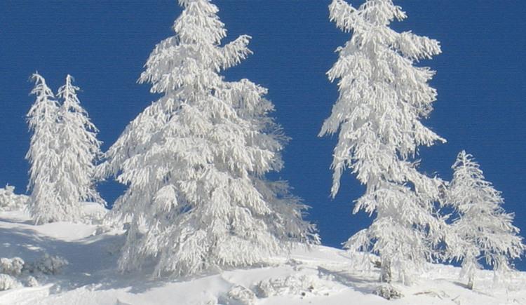 Winterlandschaft (© Winterauer Reinhart)