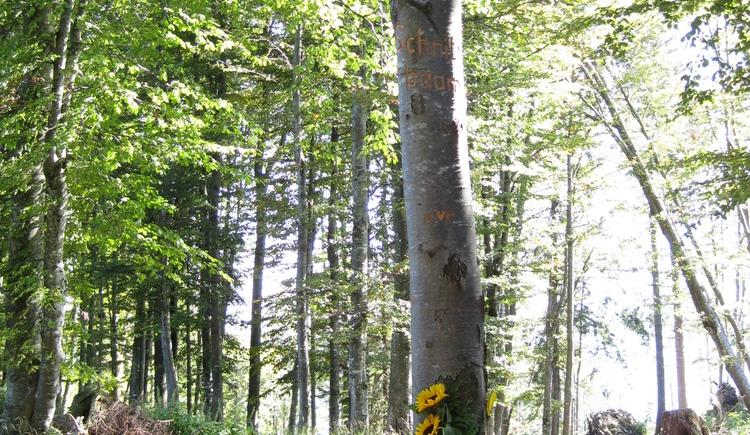 Schnitzbaum beim Glückplätz \