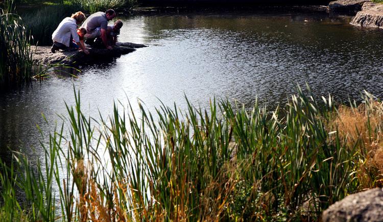 Teich. (© Mühlviertler Alm Weibold)