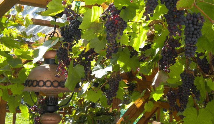 In der gemütlichen Weinlaube den Abend ausklingen lassen
