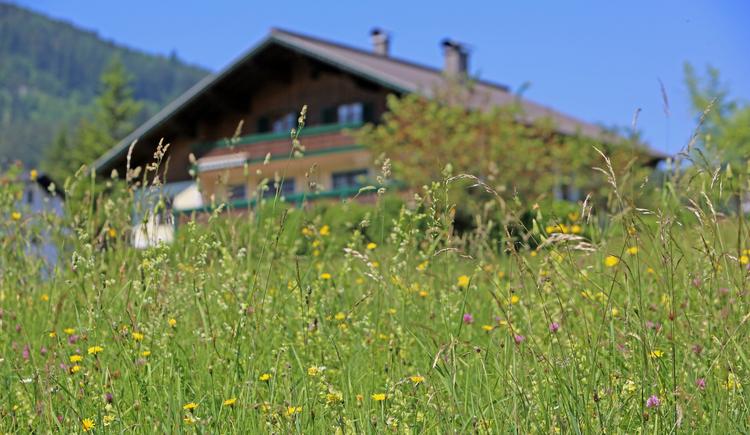 Hier sehen Sie unser Ferienhaus im Sommer. (© Brandwirt)