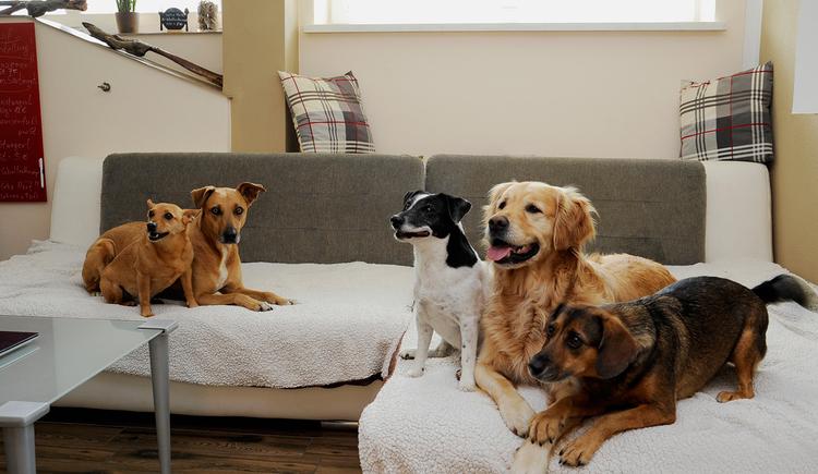 Gästehaus Zeller in Mining - Hunde auf Sofa