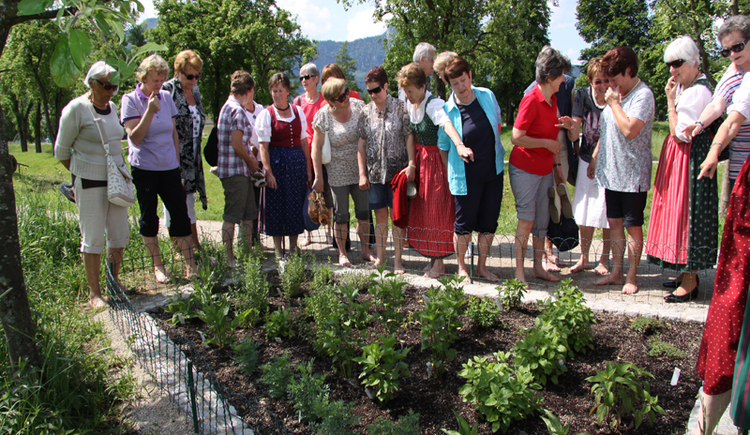 People are standing in front of a herb patch