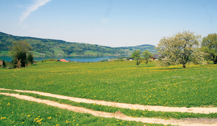 Feldweg, Landschaft, Berge. (© Tourismusverband MondSeeLand)