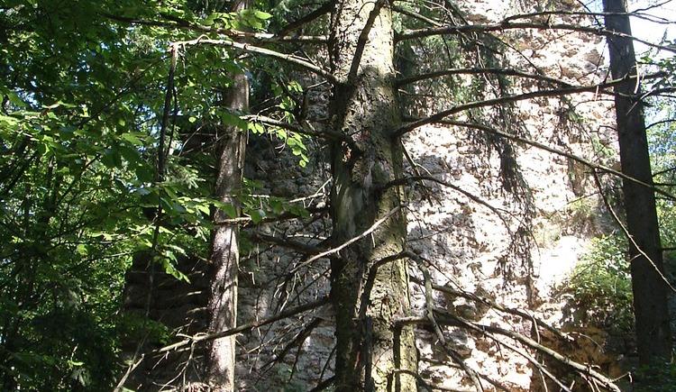 Turmrest Ruine Saxenegg