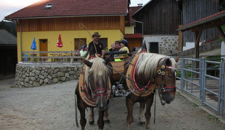 Scherhäufl Ranch (© Marktgemeinde Königswiesen)