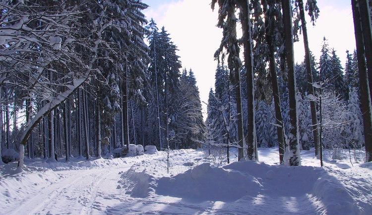 IM WINTER (© Gemeinde Sandl)