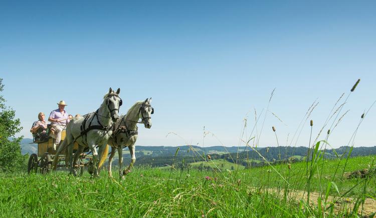 Kutschenfahren im Pferdereich Mühlviertler Alm (© OÖ.Tourismus/Erber)
