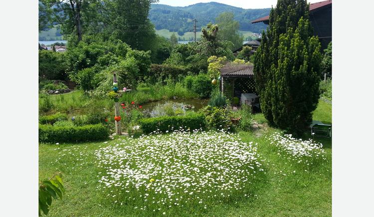 Blick in den verblühten Garten, Teich, Sträucher