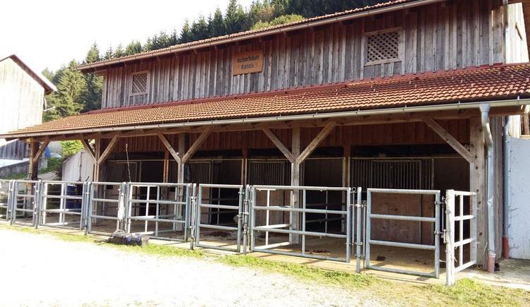 Scherhäufl Ranch Stall (© Scherhäufl Ranch)
