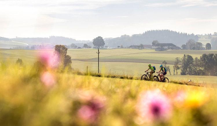 Biken im Granitland Mühlviertel. (© Oberösterreich Tourismus GmbH/Moritz Ablinger)