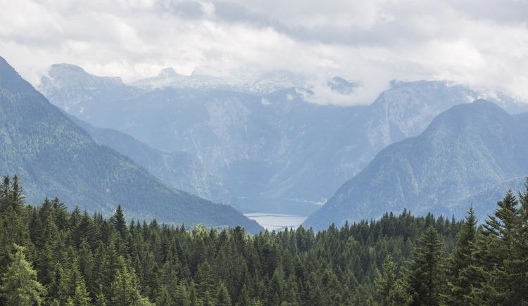 Durch die Wälder von Bad Goisern gehts ins Ausseerland. (© KTM Fahrrad)