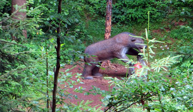 3D-Bogensport in den herrschaftlichen Wäldern