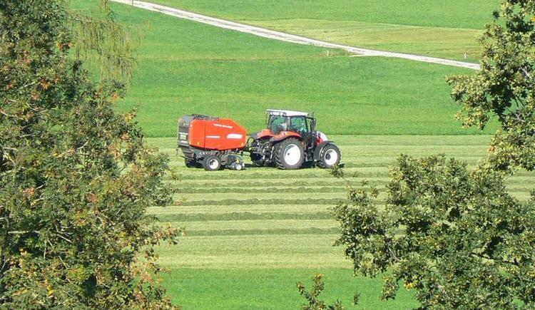 Arbeit am Bauernhof