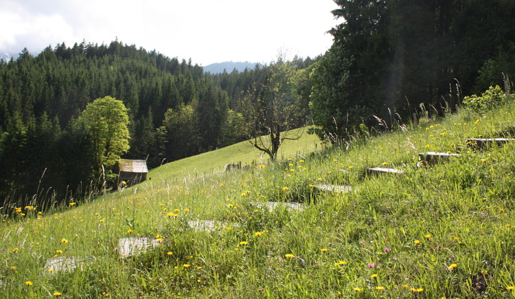 The stepped way leads through a meadow landscape to the Calvary.