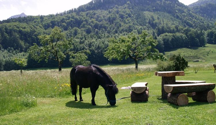 Stadlmannbauer Pferd