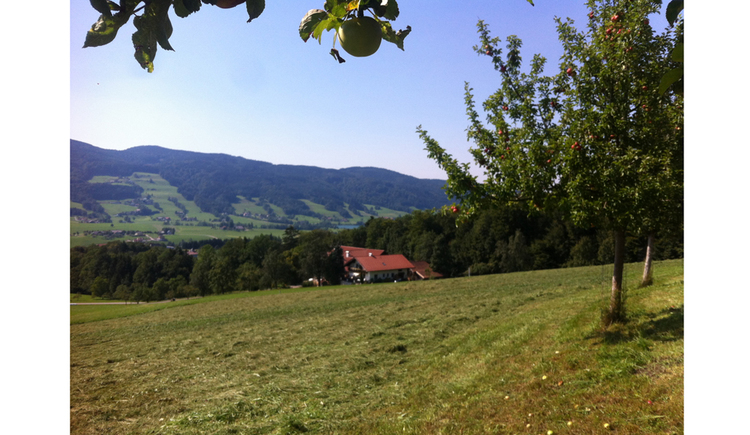 cutten meadow, in the background house, wood, mountains\n