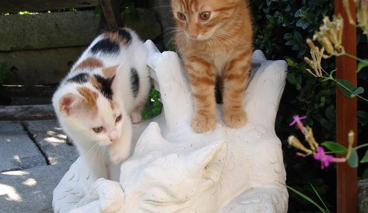 Unsere Katzen (© Bammer im Herndlberg)