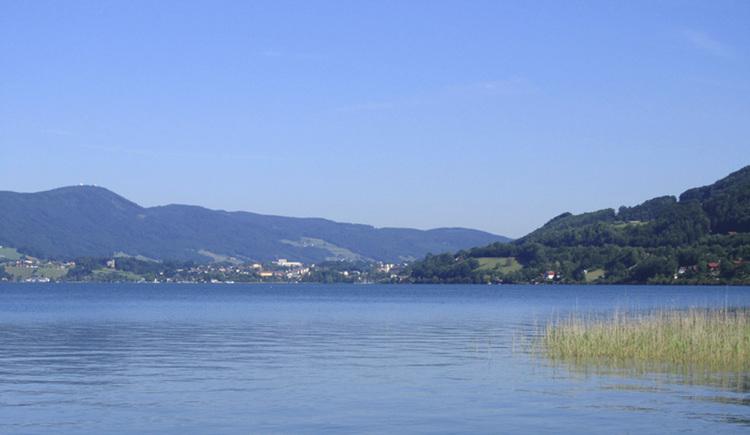 Blick auf den See, seitlich Schilf, im Hintergrund die Landschaft