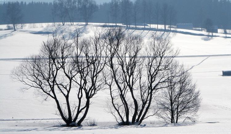 Durch die Hochfichtgemeinde führt Sie dieser Winterwanderweg.