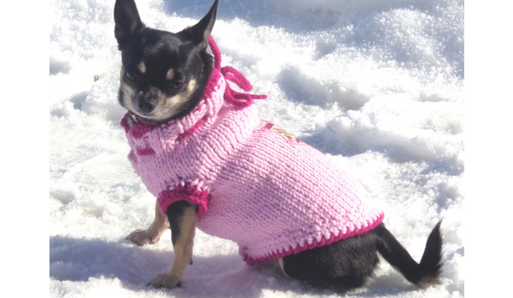 dog in self-made cloths