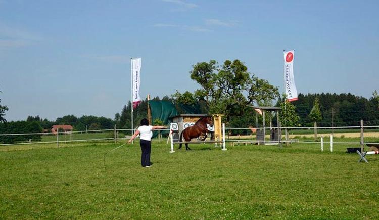 Lust am Leben Outdoor Adventure Lernen mit Pferden