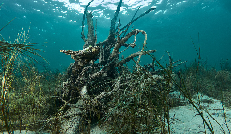 Tauchen Unterwasserwald
