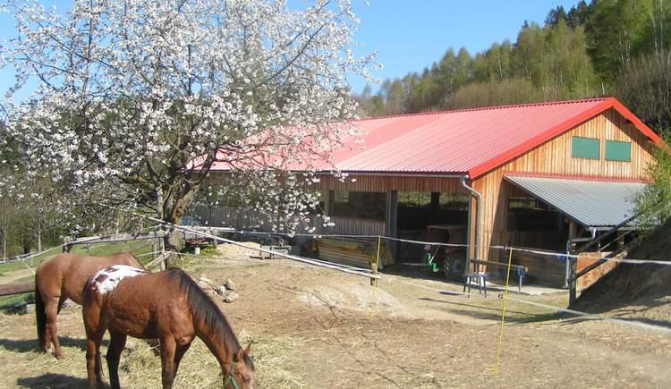 Wild Mountain Ranch