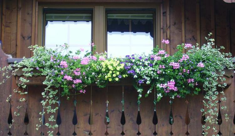 Balkonblumen vom Appartement Inge. (© Inge Voglmaier)