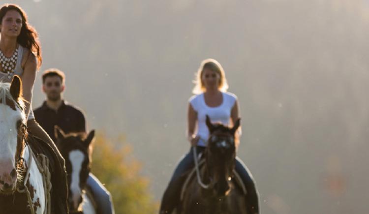 Horse in Harmony (© Meike Gaisbauer)