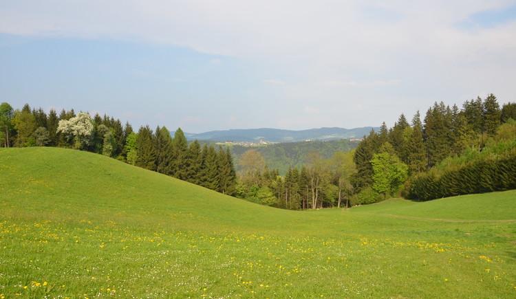 Engelhartszell, Stadl, Reiten, Ausblick. (© tvezell)
