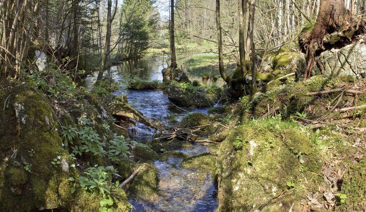 13_teichltalaustritt-sulzbacher_bach_natur (© TVB Pyhrn-Priel/Sulzbacher)